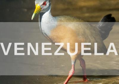 Venezuela Specialists